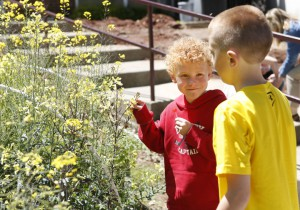 First-grade student Caden McNamee and 3rd-grade student Sam Wright pluck kale blossoms to eat from the garden at Pikeville Elementary School (PIkeville Independent). Photo by Amy Wallot, April 28, 2015